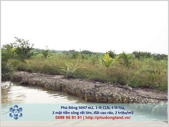 Mua bán đất nông nghiệp Đồng Nai xã Phú Đông Nhơn Trạch mặt tiền sông lớn